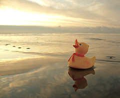 The Duck on the Sea by N.R. (cc)